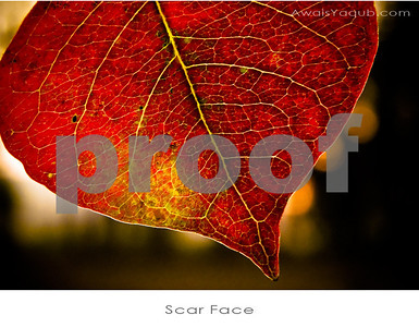 Autumn Leaf upclose
